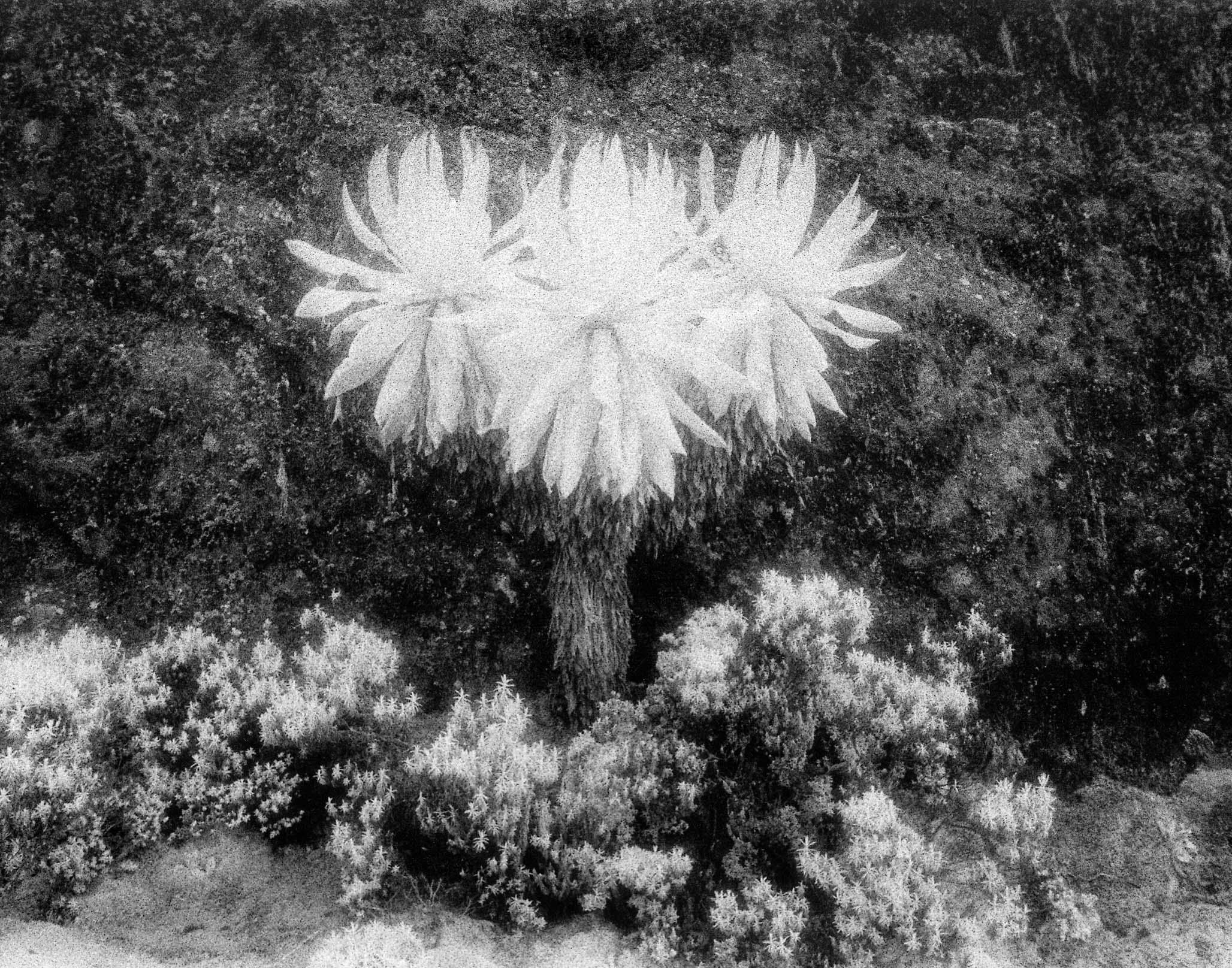 Flowers of the Monn